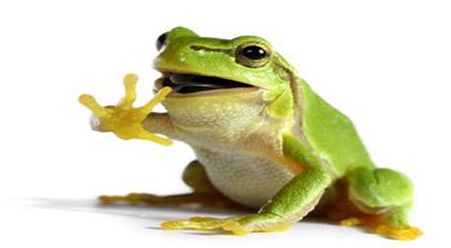 a-talking-frog